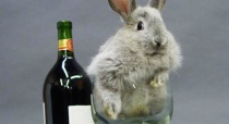 easter bunny with wine